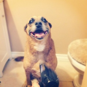 Radar enjoying the blow dryer.